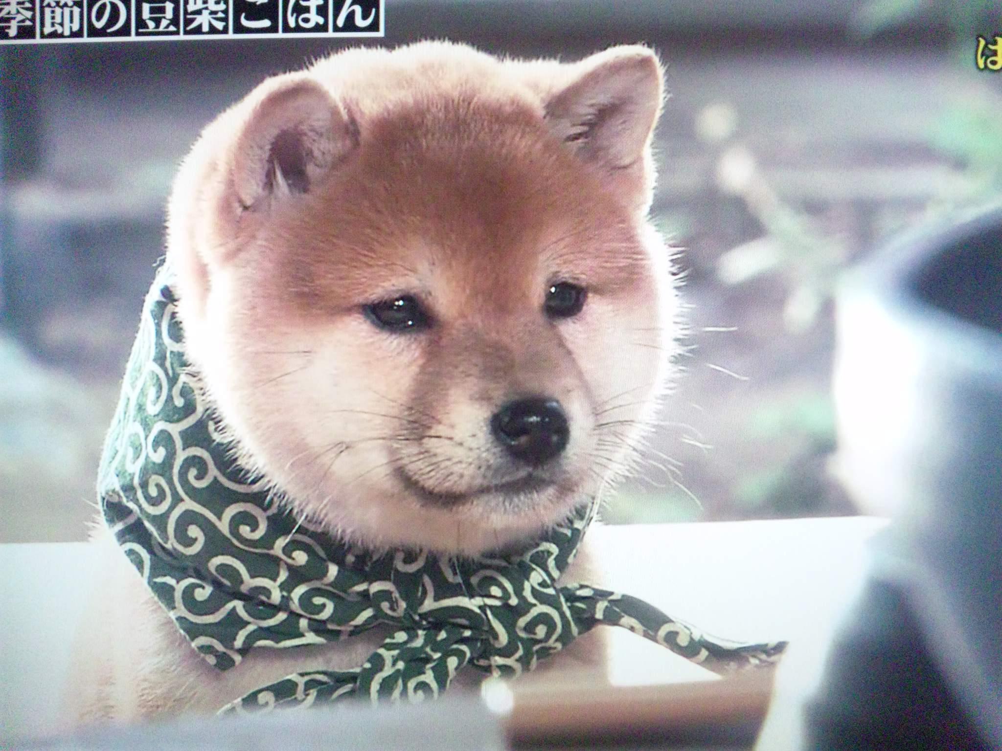 【社会】『日本はすごいんだ』『世界から尊敬されているんだ』という出版物やテレビ番組 自信喪失の現れYouTube動画>4本 ->画像>57枚